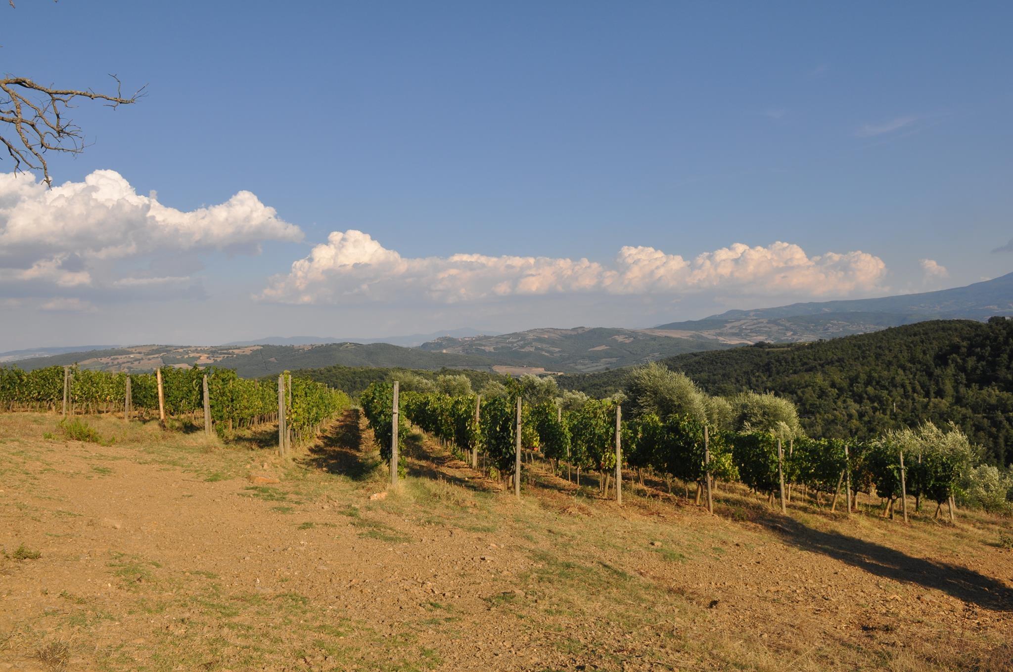 Scopone - Montalcino (Tuscany) //  Wine Map of Italy>  //  Wine Map of Tuscany>