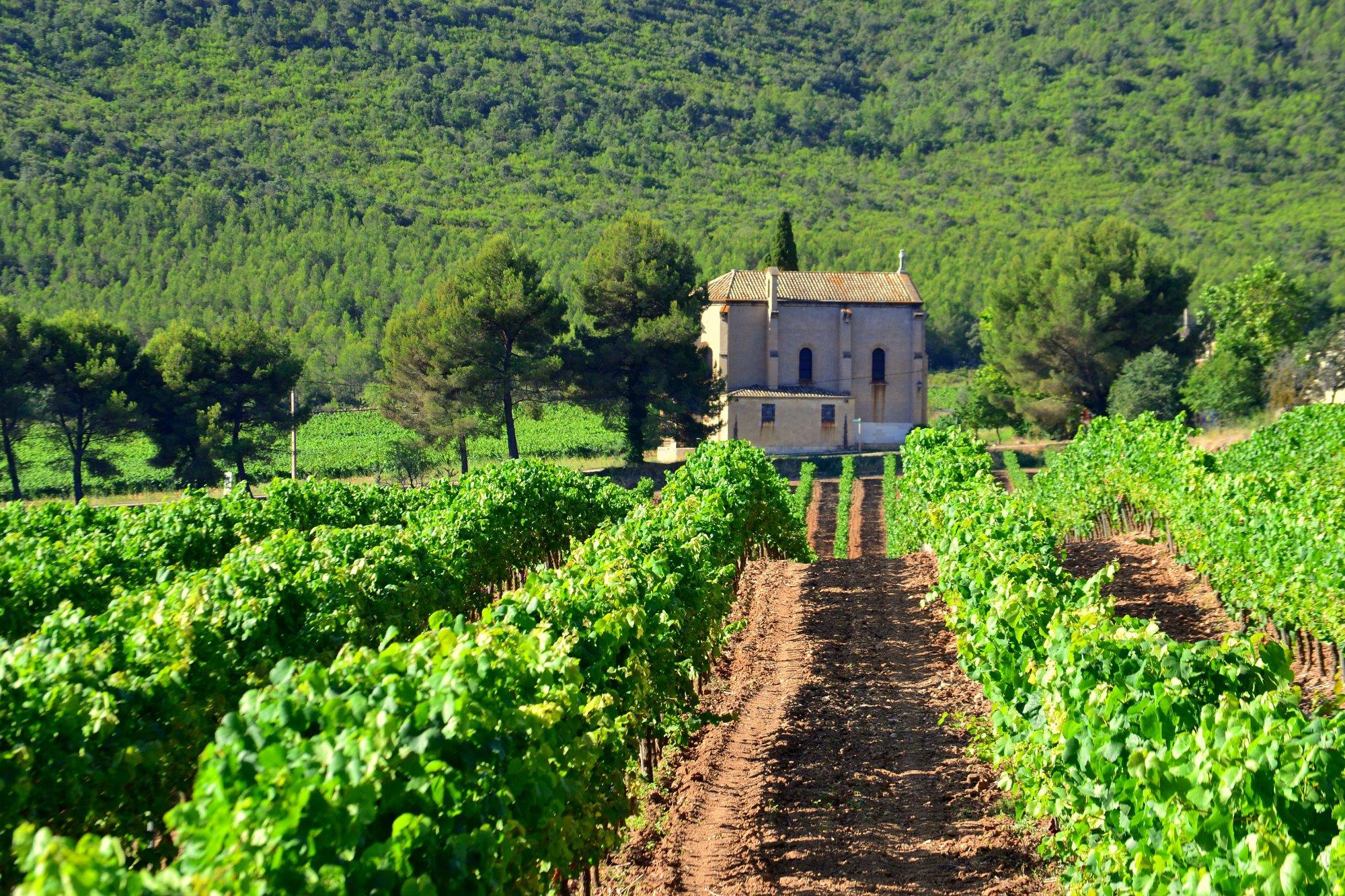 Maset_vineyards_2.jpg