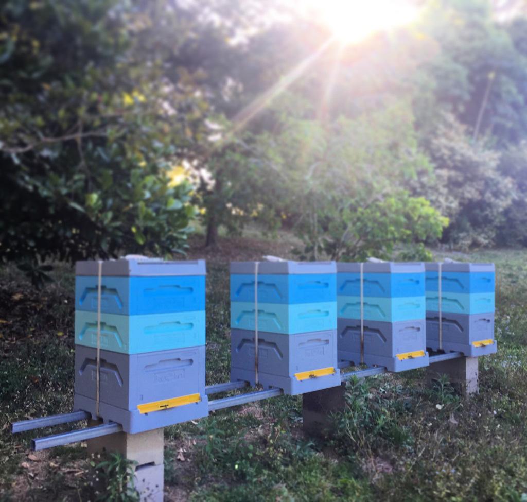 Sandras Hives.jpg