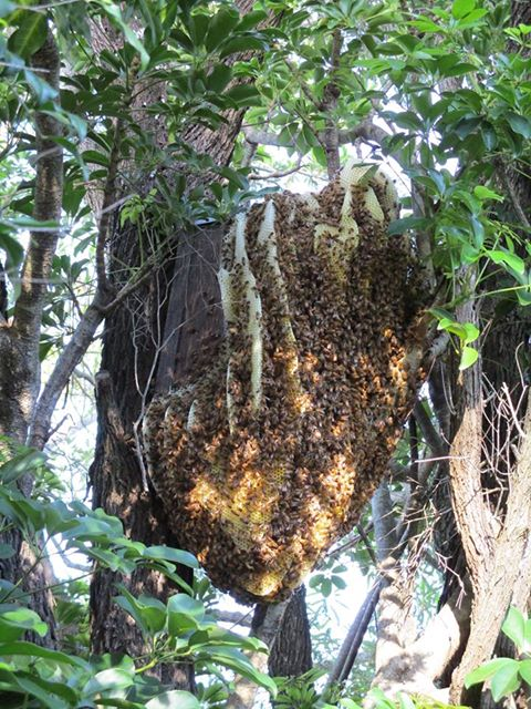 Look closely to see a nesting box encased by a beehive.