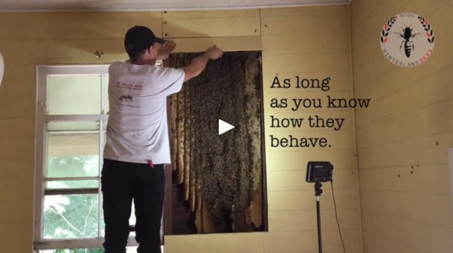 Beekeeping Videos — Hinterland Bees