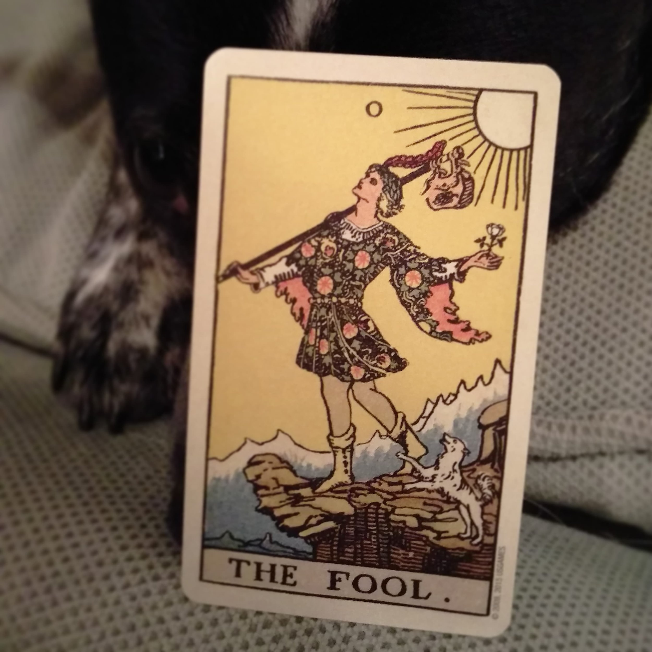 The Fool, photo credit E. Tempesta