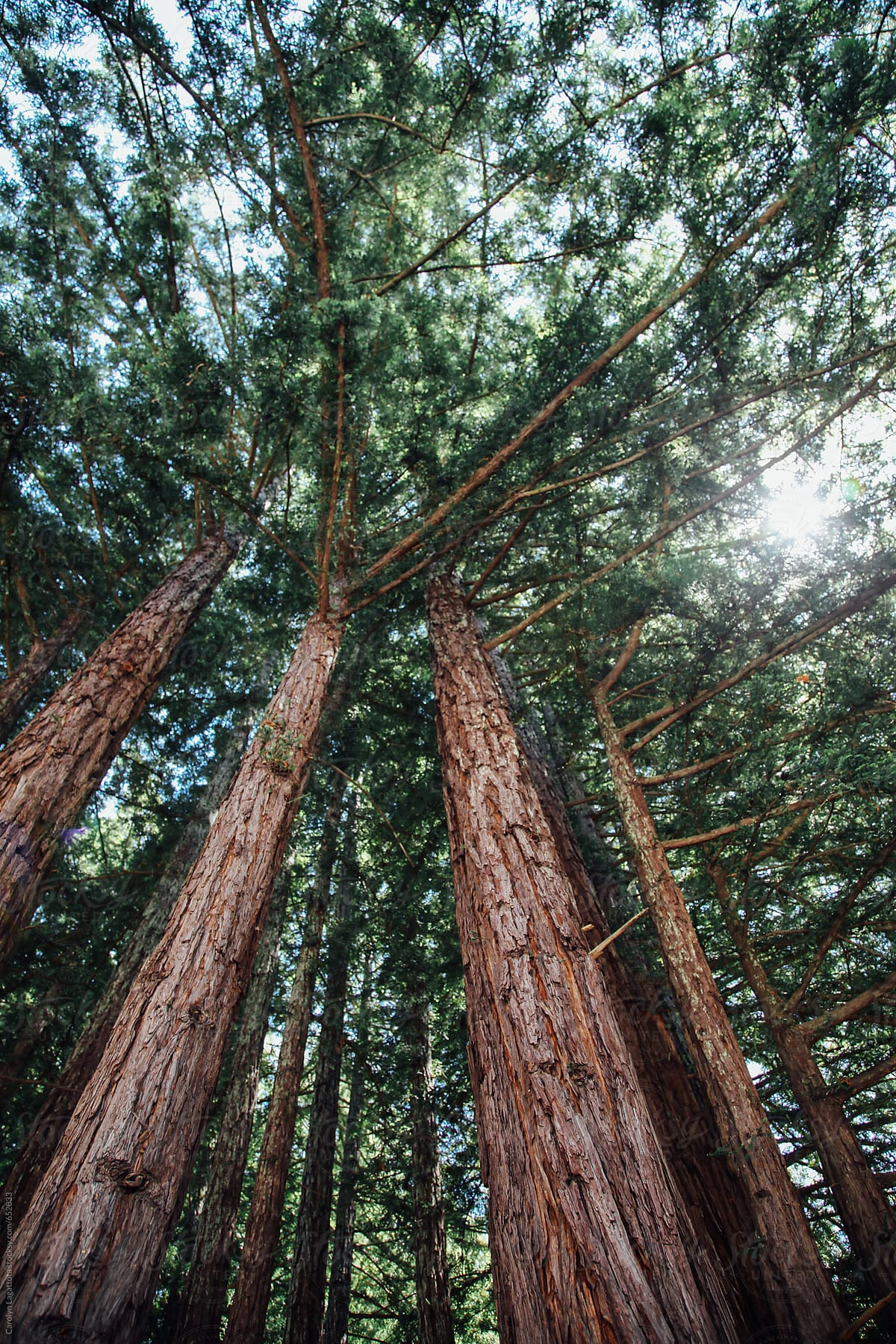 A walk in Hendy Woods - Enjoy a forest bath. 1,000 year old trees bathe you in the healing sights, sounds, and aroma of redwoods.⊙ Hendy Woods State Park