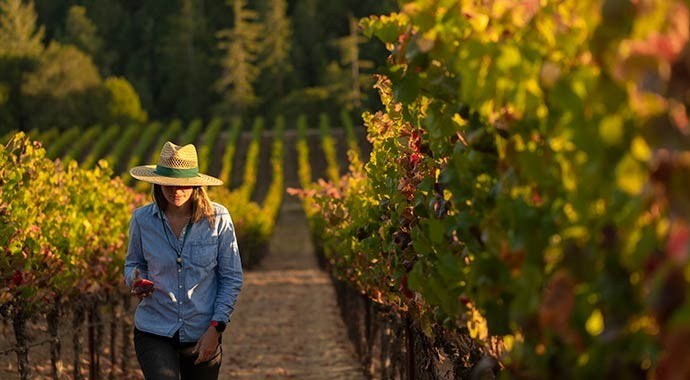 goldeneye-home-katey-vineyard.jpg