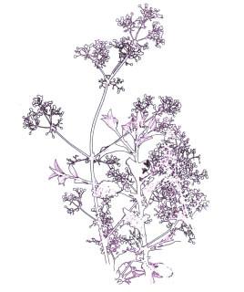 horsley hedgerows 2 single may.jpg
