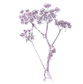 Well Urned Rest - Horsley hedgerows card 6.jpg