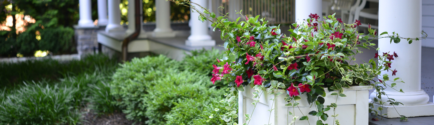 LOVE YOUR LANDSCAPE - Tilly is your online resource for custom and personalized professional landscape plans.