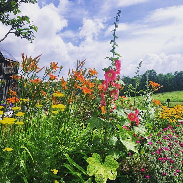 Take it in, feel the calm 🙏🏼 . . .  #loveyourlandscape #online #remotedesign #landscapedesign #landscape_love #landscapearchitect #backyard #yard #plantsofinstagram #plantsplantsplants #greenthumb #plantstagram #summer #art #canada