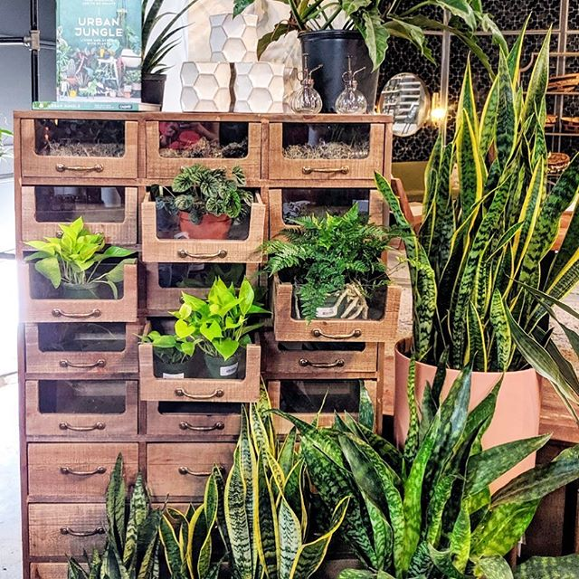 If you run out of window space, plants in drawers is always an option! #inspiration . . .  #loveyourlandscape #online #remotedesign #landscapedesign #landscape_love #landscapearchitect #backyard #plantsofinstagram #plantsplantsplants #greenthumb #plantstagram #ihavethisthingwithplants #shoplocal #denver