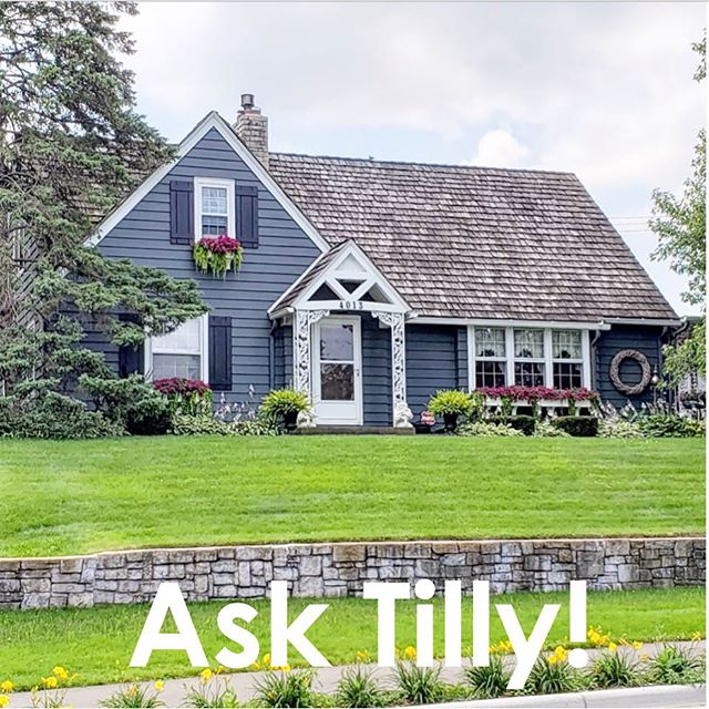 Ask Tilly! Welcome to #tillytuesday Green Thumb Edition. Ask our design team any questions you may have. Comment below 💚 . . . 📷: @historicminnesota #tillydesign #tilly #loveyourlandscape #online #remotedesign #landscapedesign #landscape_love #landscapedesigner #landscapearchitect #backyard #yard #plantsofinstagram #plantsplantsplants #plantsmakepeoplehappy #flowerstagram #greenthumb #plantstagram #asktheexpert #expert