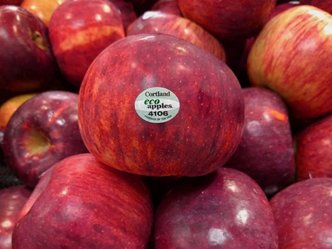 Buy Our Apples - Available late September - DecemberLooking for the best apples in New England? The search ends here, try our apples today!