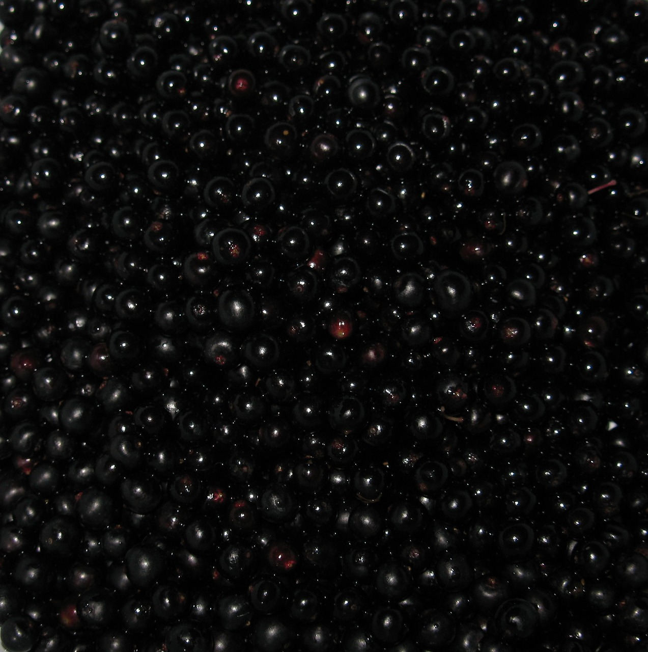 elderberries 3.jpg