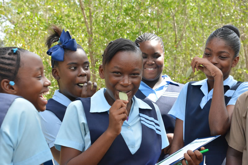 jamaican-high-school-students-taste-mangrove-leaves-salty.jpg