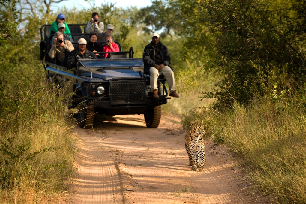 safari-051117.jpg