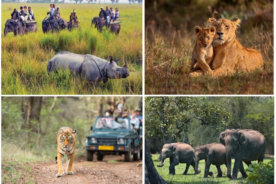 Collage_Wildlife.001.jpg