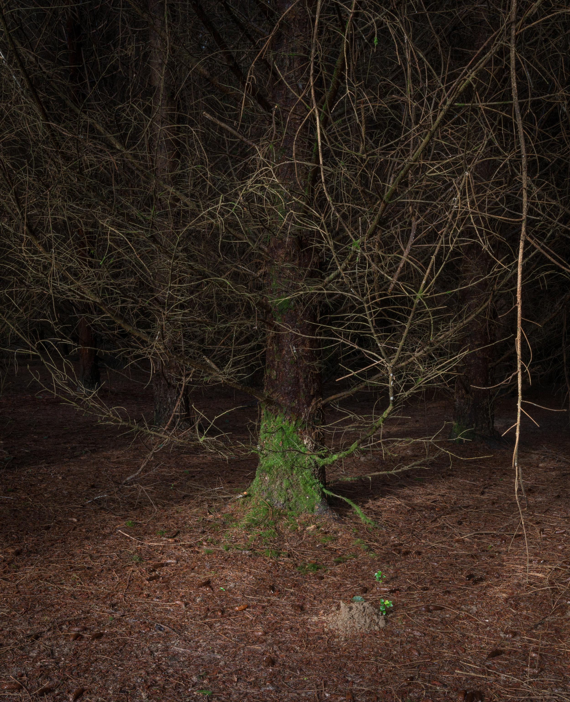 habitat-15.jpg