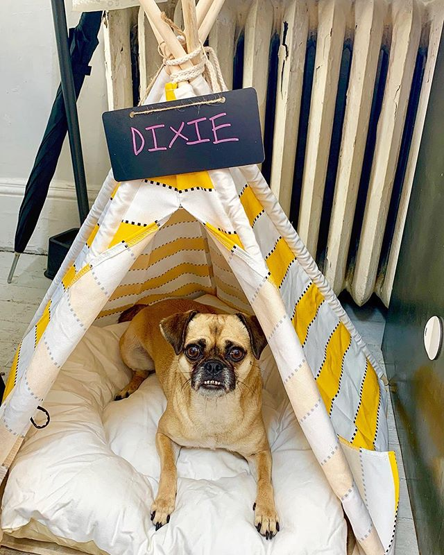 Dixie loves her new office digs!
