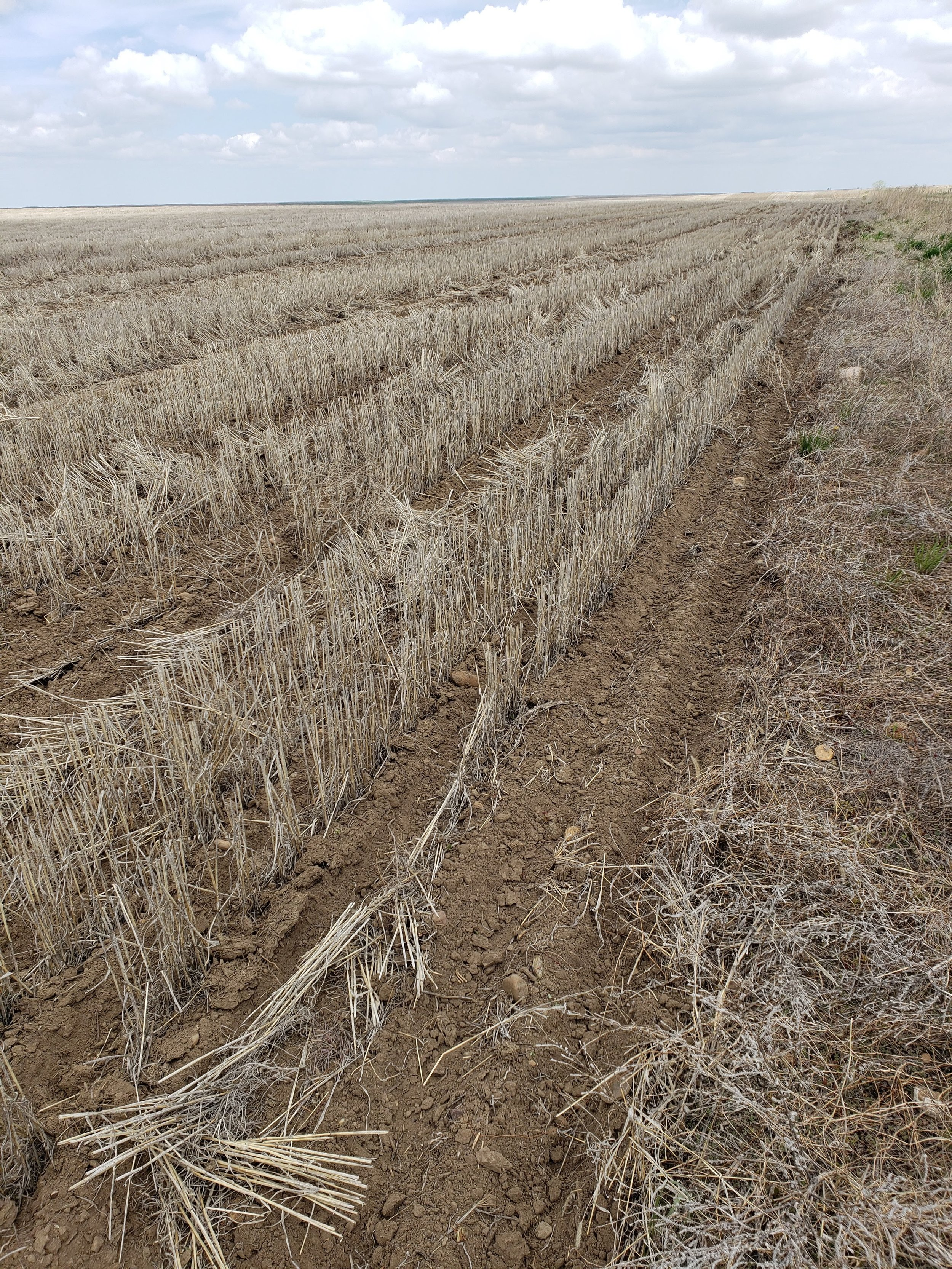 No till field in north eastern Montana