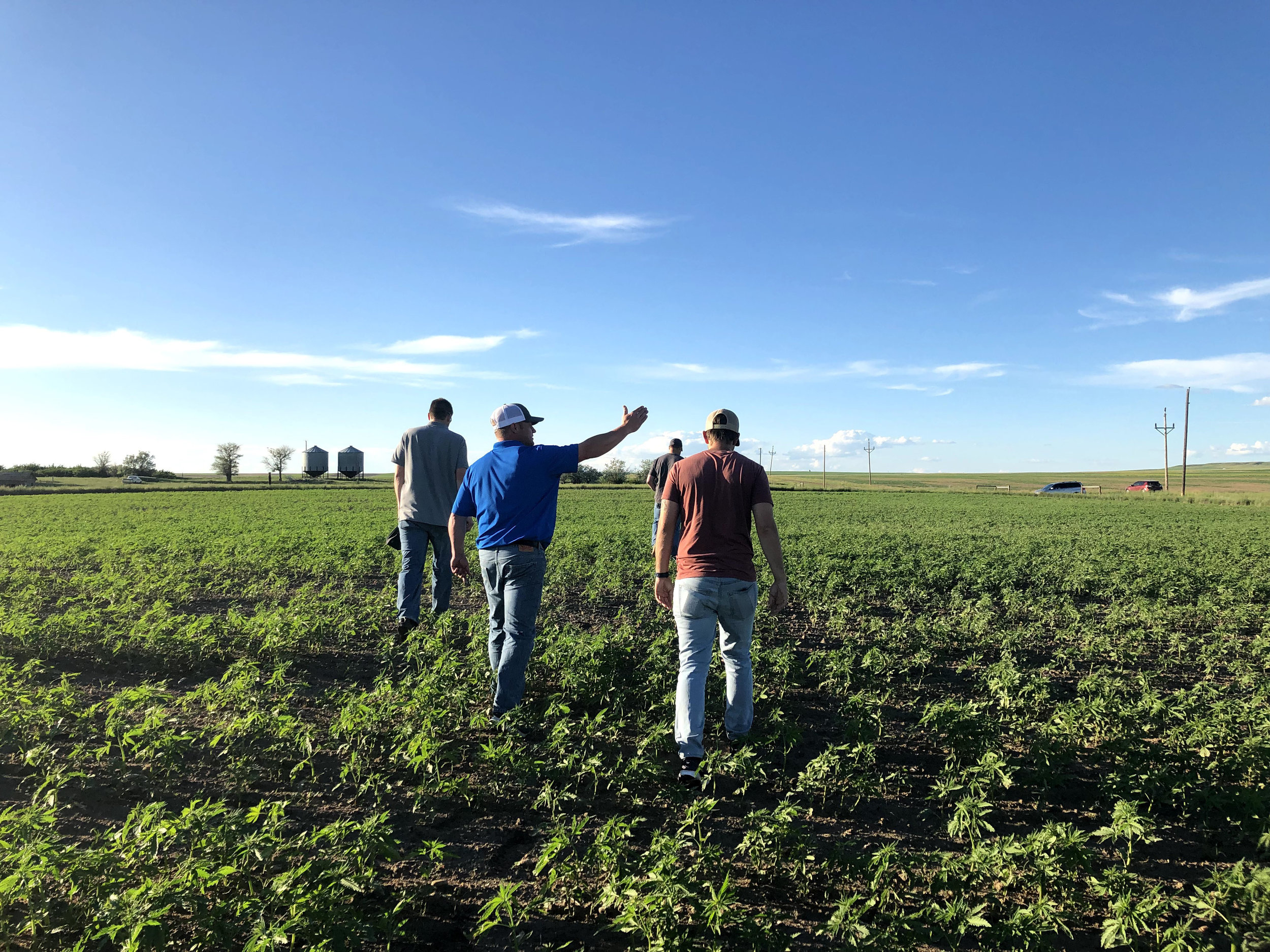 Local farmers walking through the fields with agronomist during our hands on Harvesting meeting