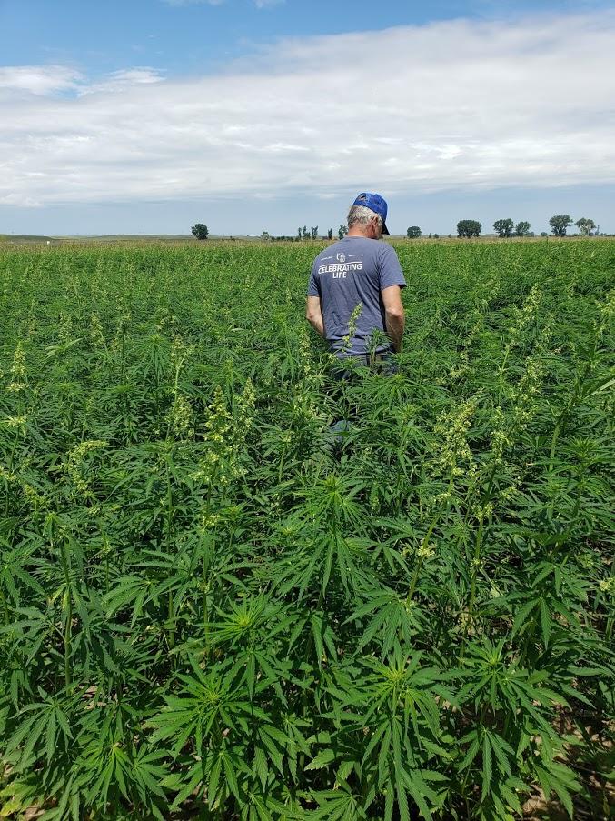 Inspecting hemp field near Sidney, MT with hemp farmer Jay Rosaaen