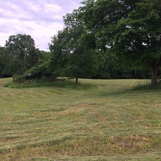 Hay has been cut! We will be baling Sunday afternoon if anyone is available and interested! We promise a hot and sweaty time 😁#coldenspringsfarm #hayseason #farmlife #workout