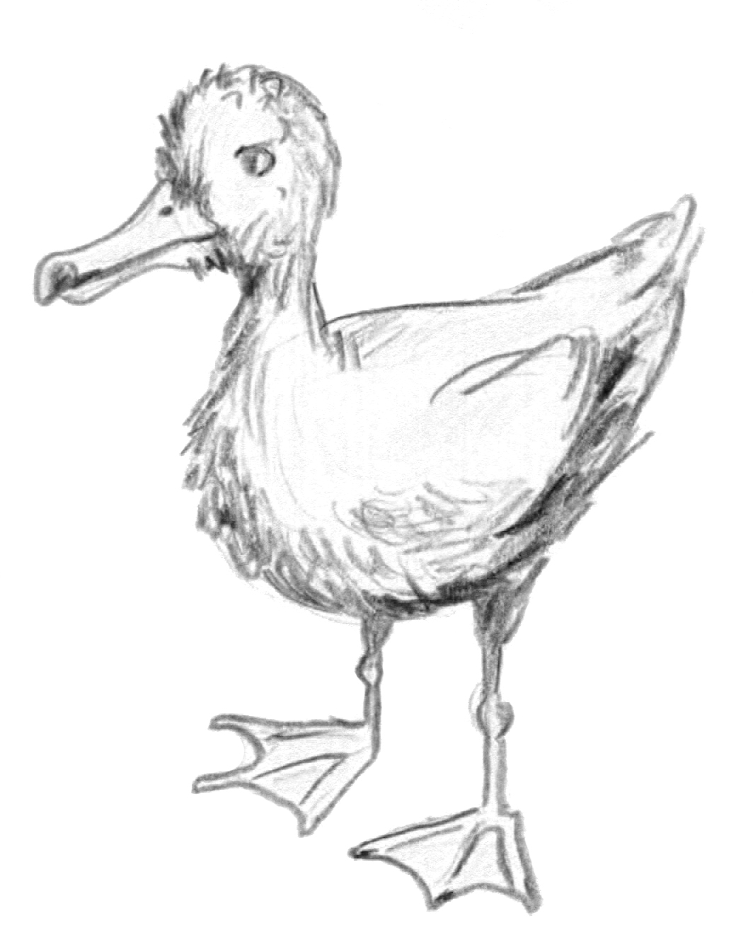 A baby seagull drawn by Alan after one followed us from a restaurant