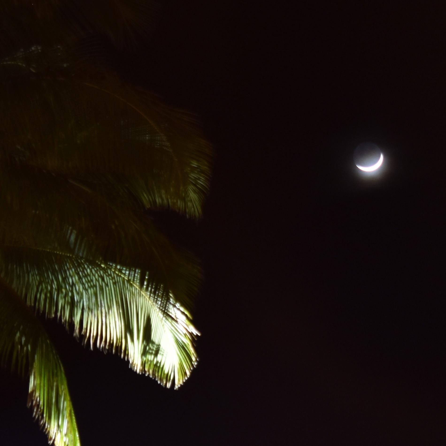 moon.palms.cropped.square.jpg