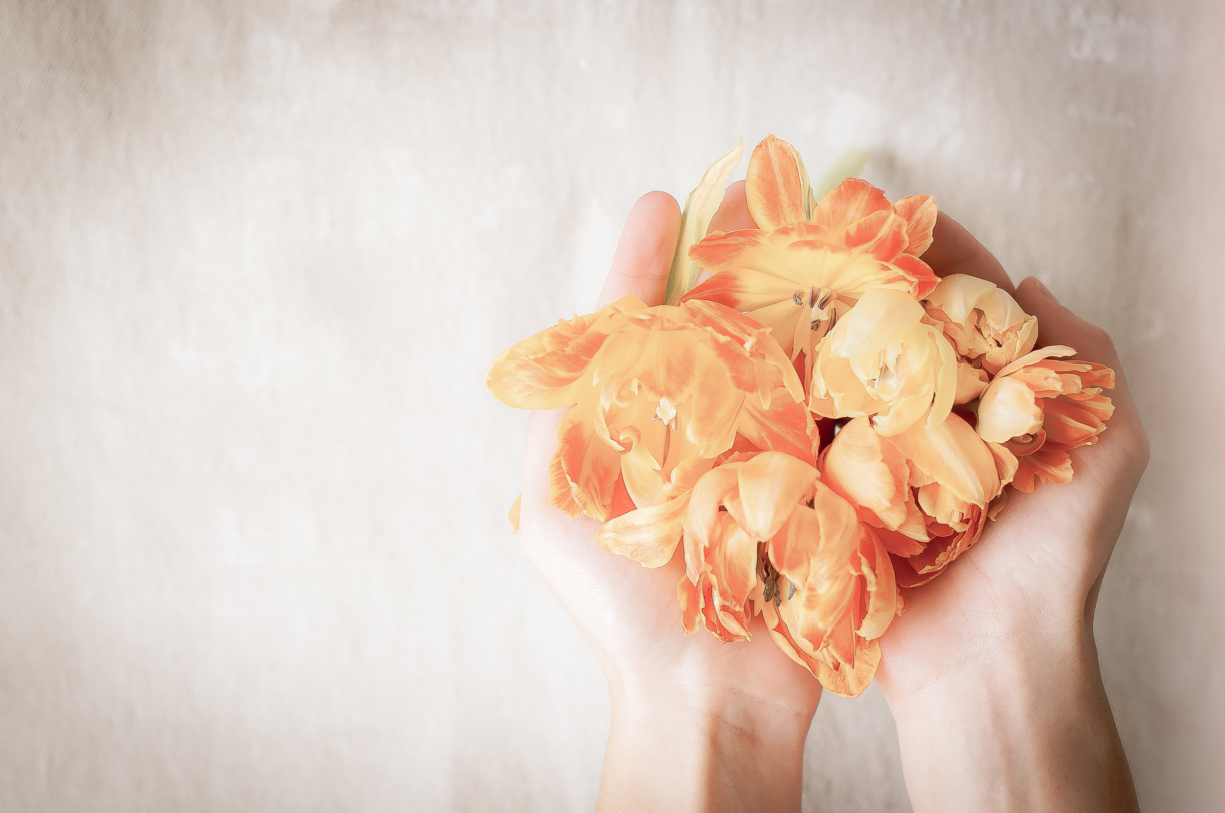 FloralPhoto-frommyhhands
