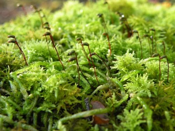 Moss_in_MT_Aspiring_National_Park_lg.jpg