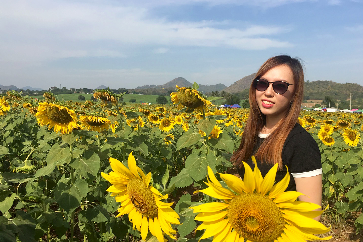 The sun is so glaring at the Manee Sorn Sunflower Field.