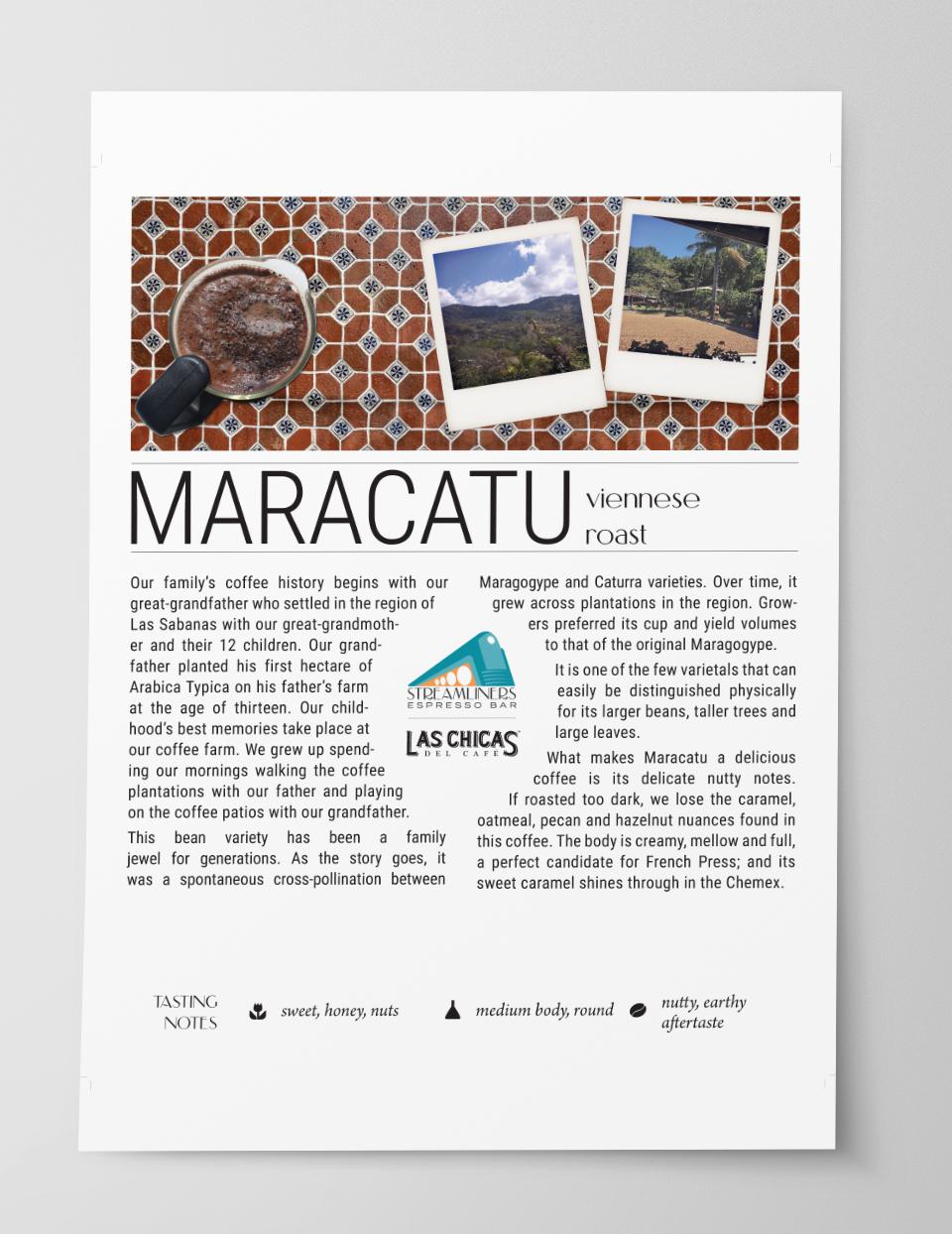 Coffee Bean Profile Poster Design 3