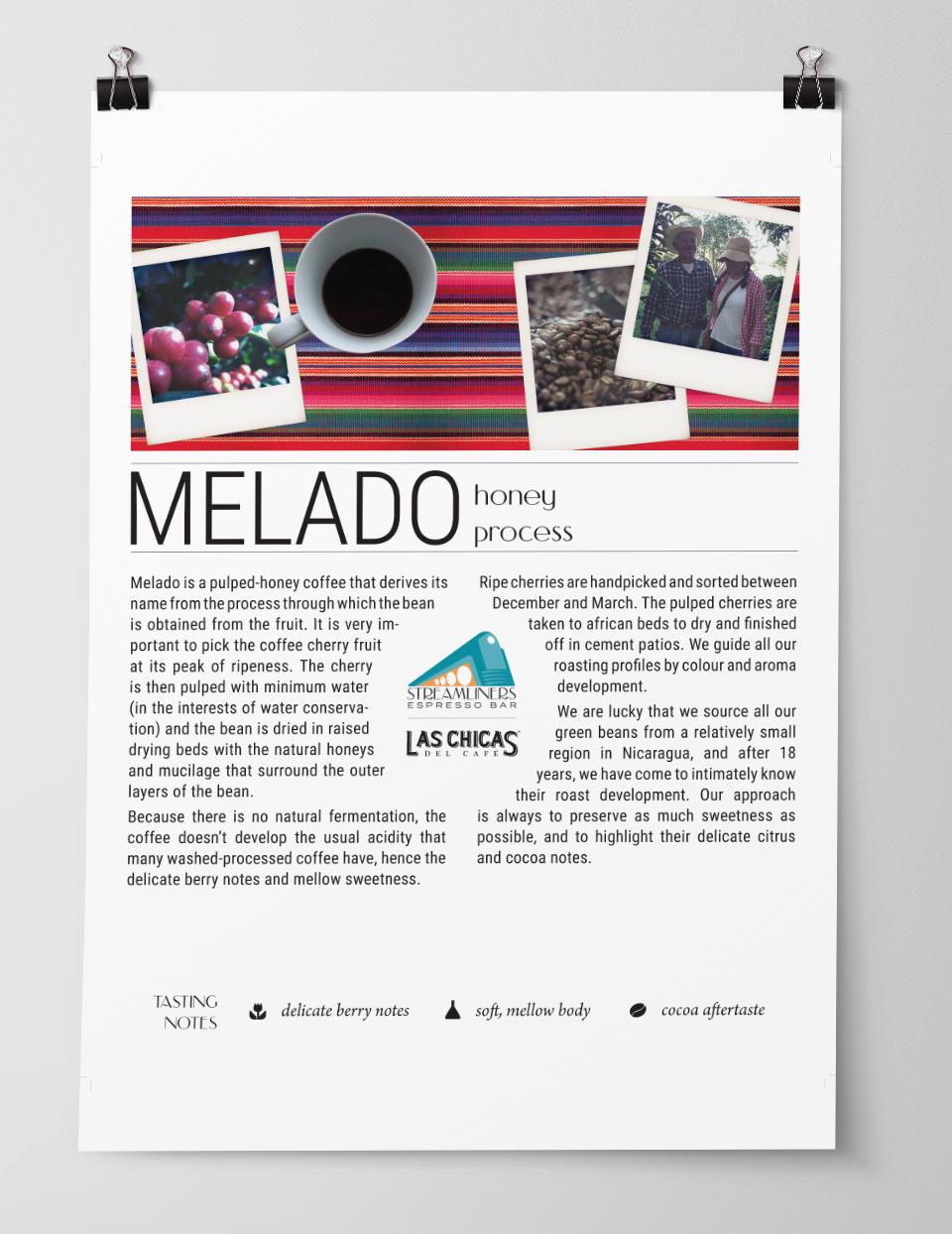 Coffee Bean Profile Poster Design 2