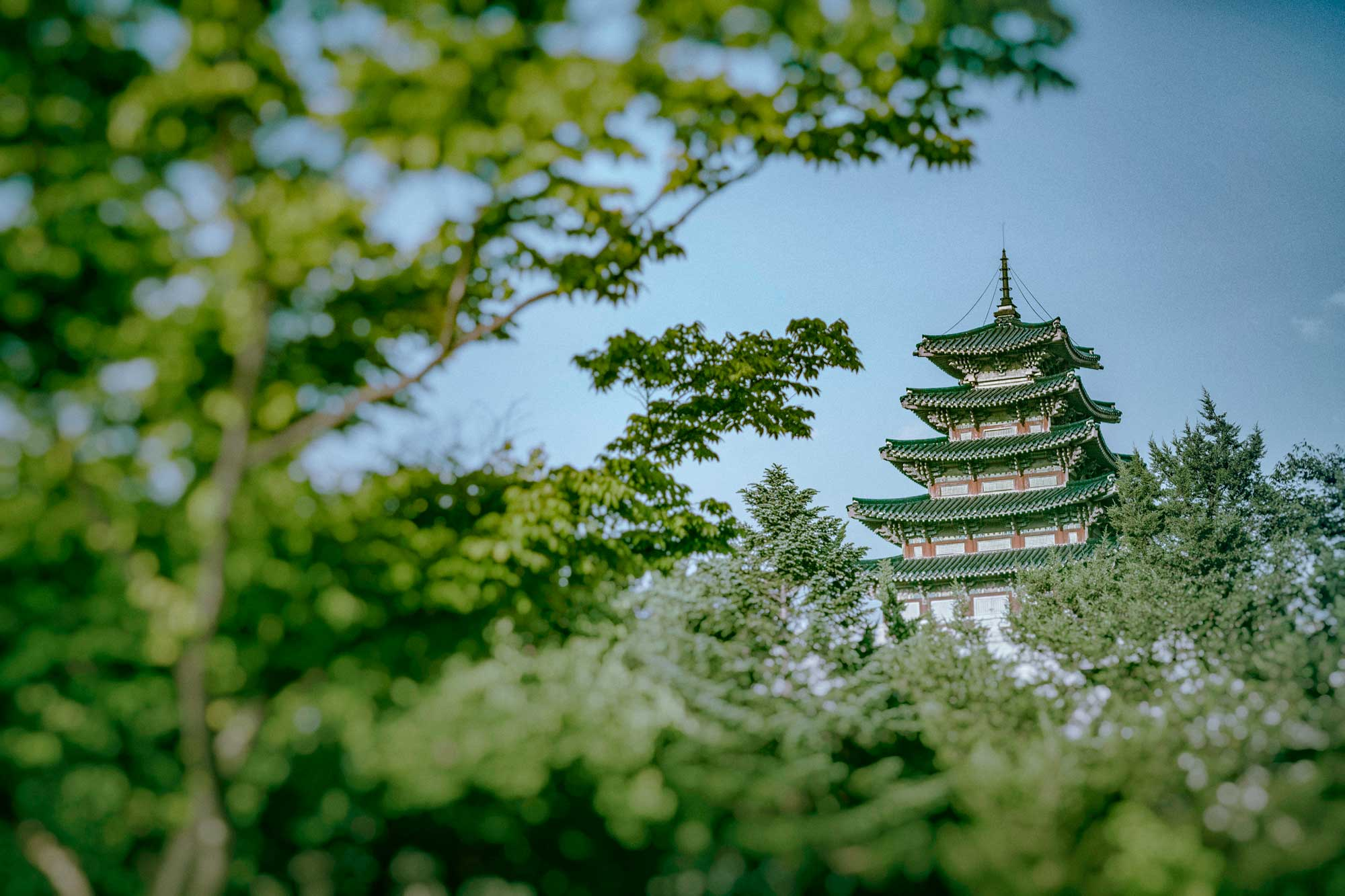 Tower-of-the-Trees-2000px.jpg