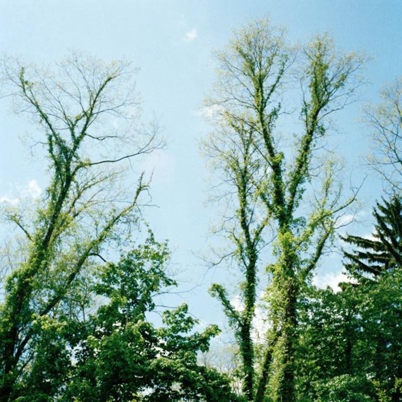 ithaca trees bugs away.jpg