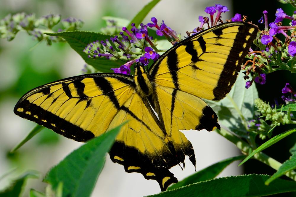 butterflyfull.JPG
