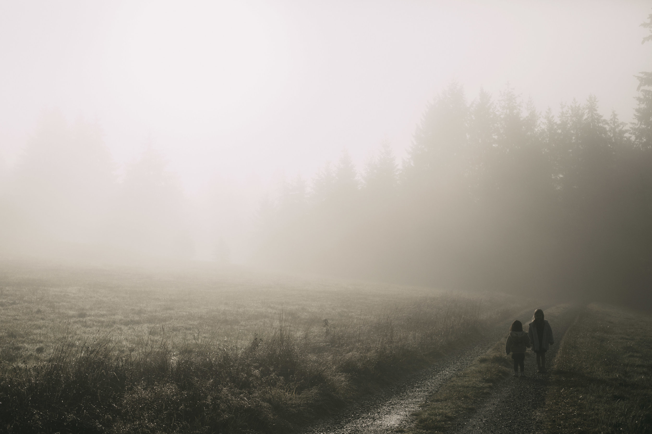 Foggy Morning 1.jpg