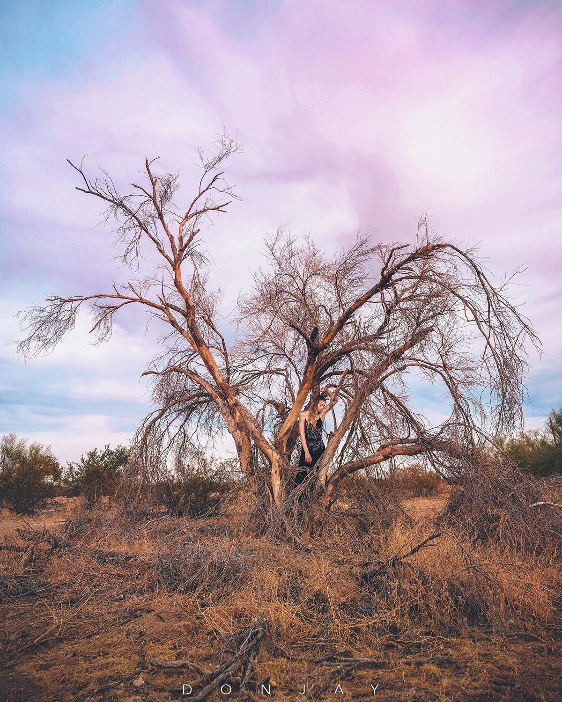 Lilyana Tree.jpg