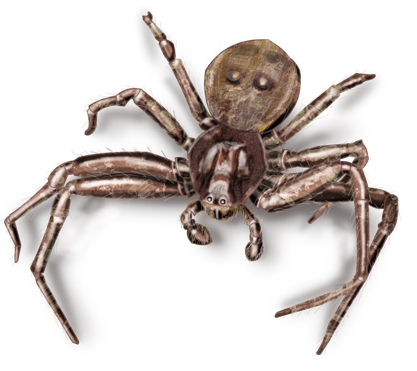 crab_spider.jpg