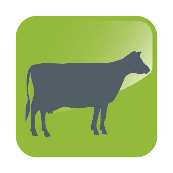 DHA ICONS-Cow.jpg