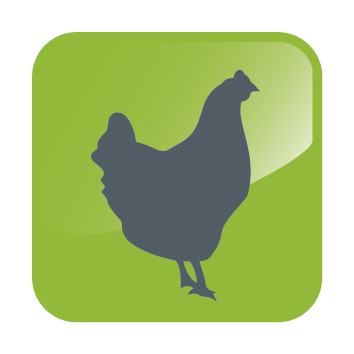 DHA ICONS-Chicken.jpg