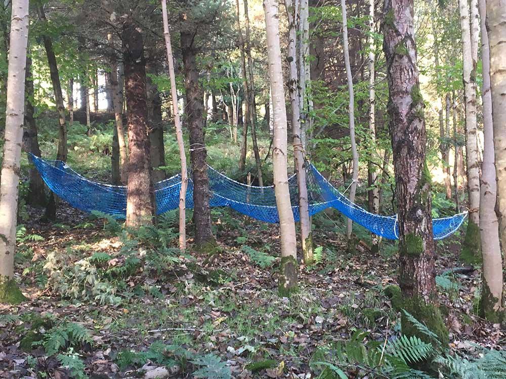 woodland-teambuilding-alt1.jpg