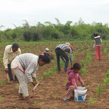 Crop seeds and tools for families in a romote village