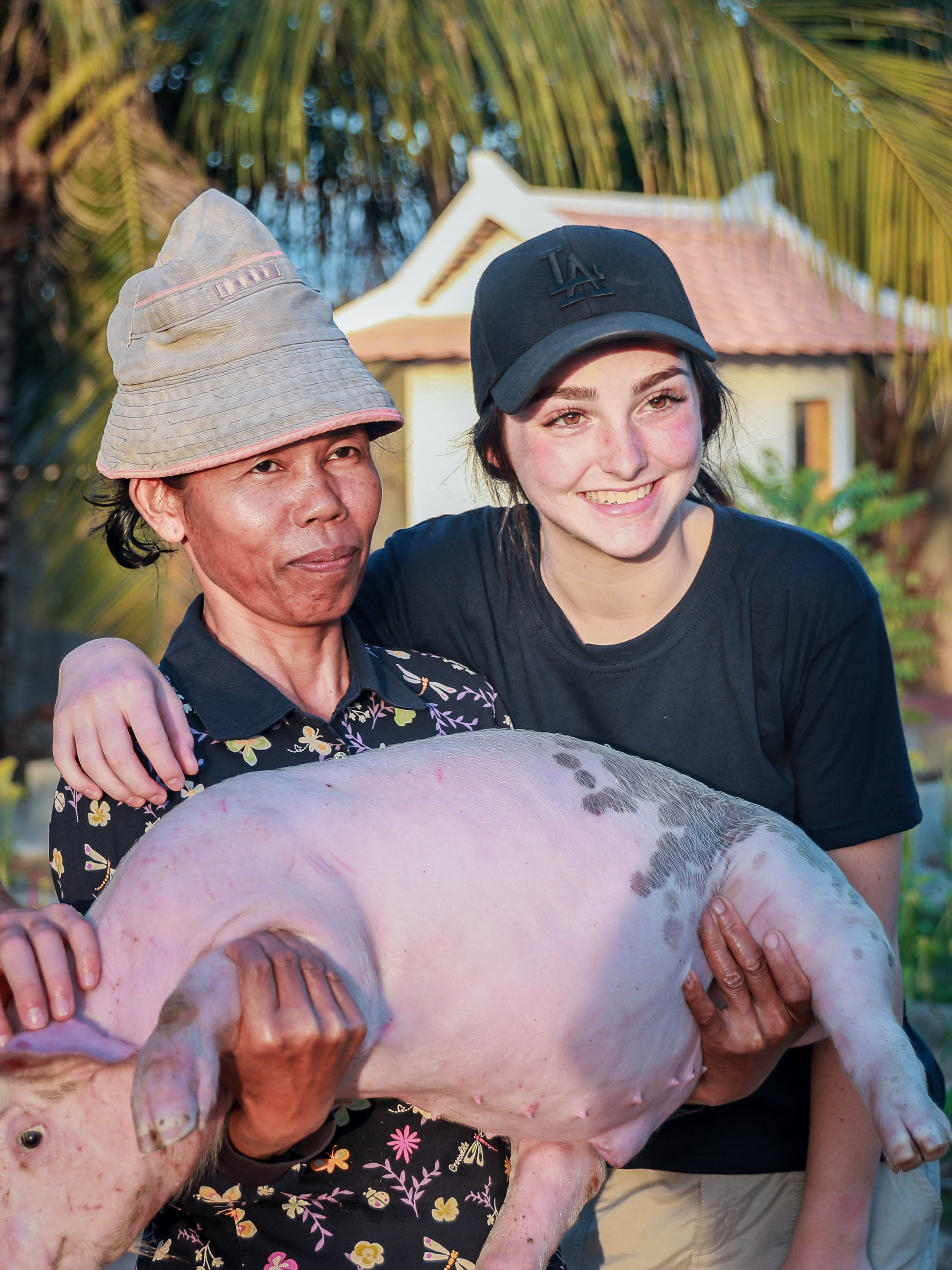 Donating pigs for breeding so families can generate an income.