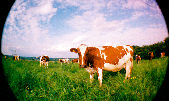 North Aston Dairy - North Aston Dairy (Est 2006) supplying 300 households in Oxford and surrounding villages with fresh, pasteurised but un-homogenised milk, cream, ice-cream, yoghurt and beef from their micro-herd of 15 Ayreshire cows, kept on 37 acres of land. By direct marketing through their own milk-round and farmer's market stall, they are able to support two full-time and one part-time income and last year had a turnover of £110,000.