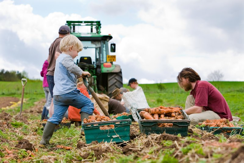 STROUD COMMUNITY AGRICULTURE -