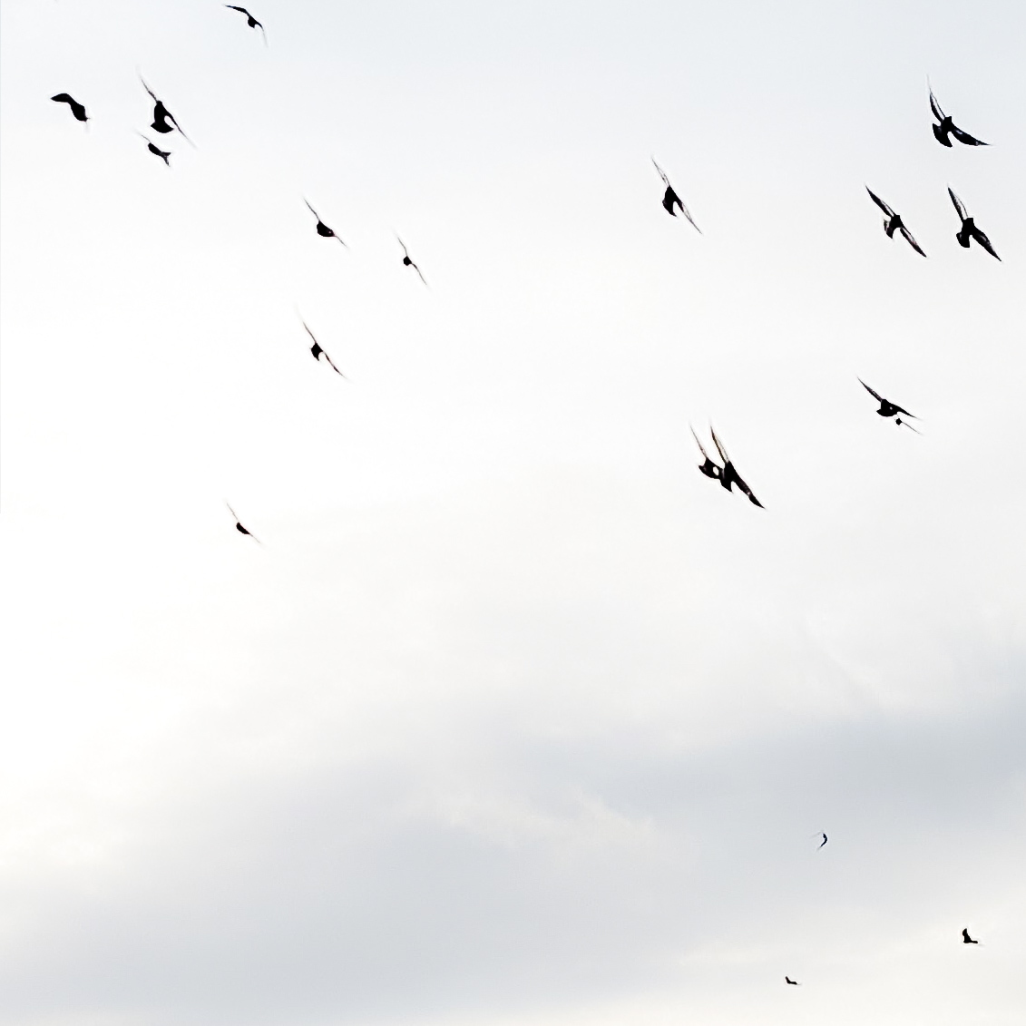 Monochrome, minimalist photo with white sky and black birds flying around.