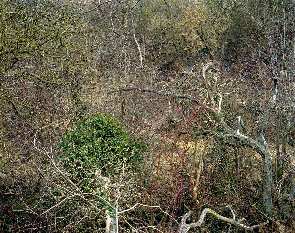 Totley Brook #1, 2011