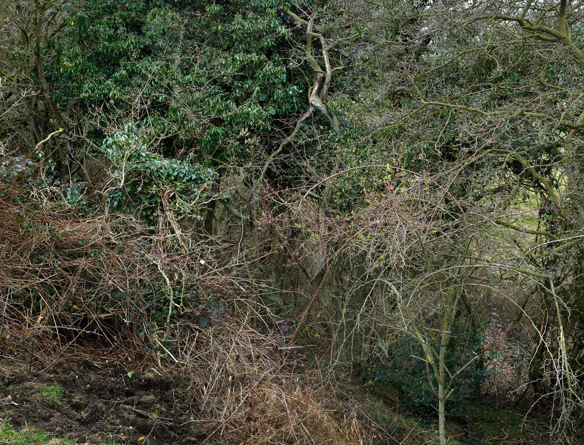 Totley Brook #4, 2012