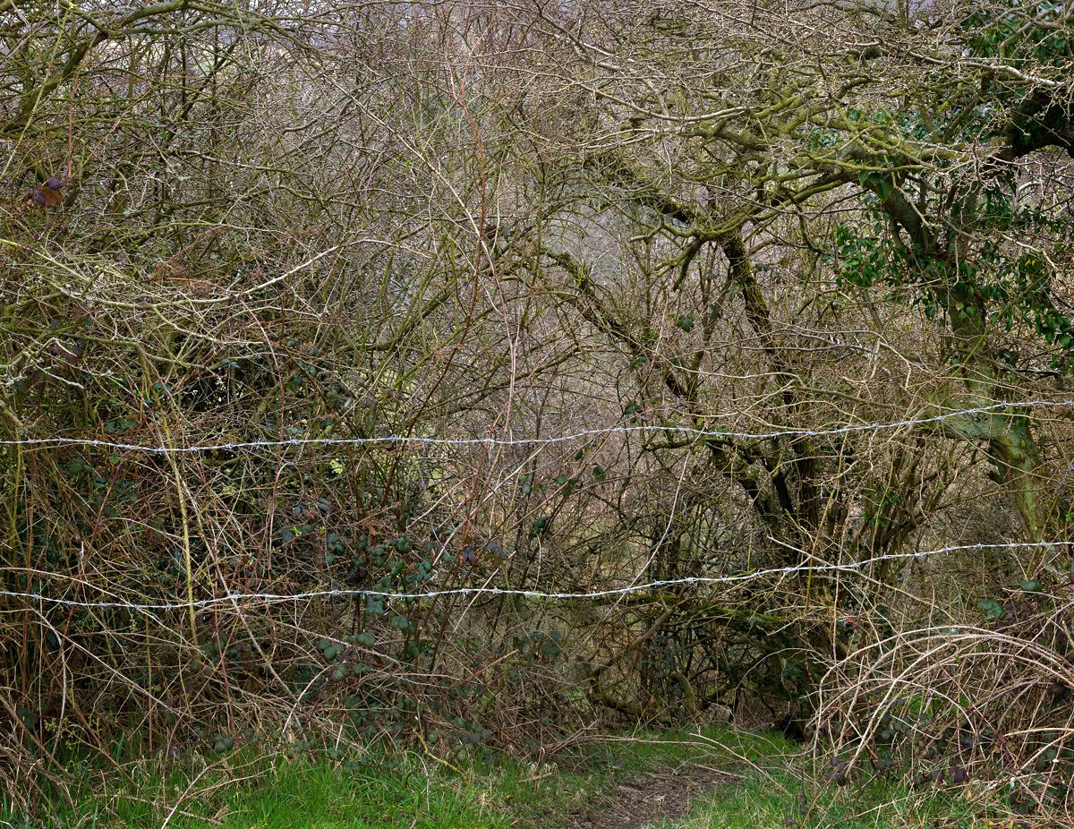Totley Brook #5, 2012