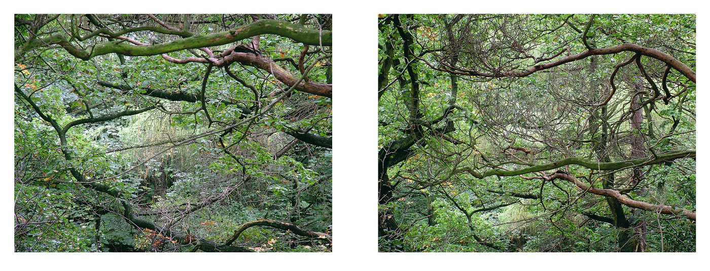 """Work developed from 2004 to 2011. Wood Land Portfolio #1 represents early explorations up to late 2008, including work made in Lathkill Dale. Wood Land Portfolio #2 represents an eventual return to the 'edgelands' of the city, and formed the basis of the 'Chora' exhibition.   Ecclesall # 1, 2005    25"""" x 12"""" pigment inkjet print —"""